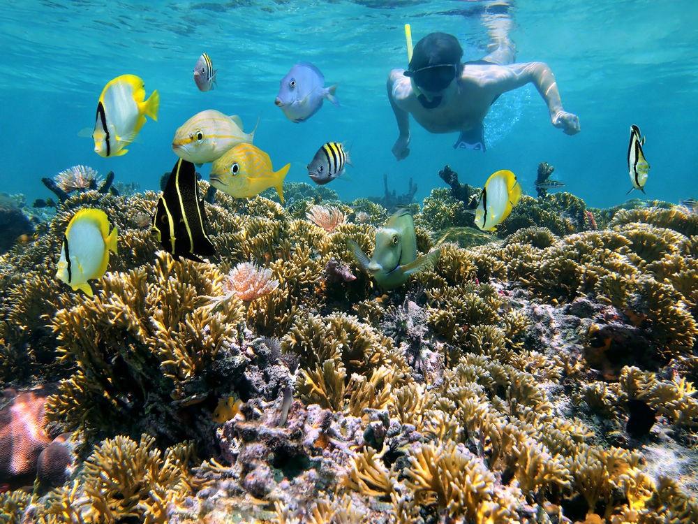 Man,Snorkeling,Underwater,On,A,Shallow,Coral,Reef,With,Tropical