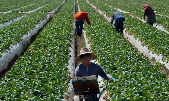 Supreme Court Strengthens Property Rights in Case Involving Labor Organizing on Farms