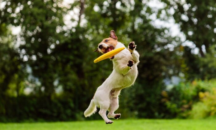 Keep your pets in shape. Slim pets develop fewer chronic diseases, which can be expensive to diagnose and treat. (alexei_tm/Shutterstock)
