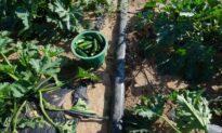 Watering methods for your indoor or outdoor gardens