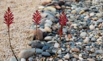Xeriscaping—a more sustainable gardening solution