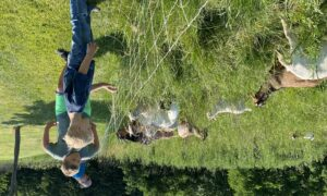 You go, goats: Using goats for lawn grooming