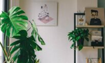 Pretty with Plusses—Indoor plant life proves beneficial in manifold ways