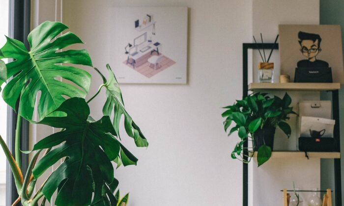 Besides providing visual appeal, indoor plants may enhance mood, air quality, and overall health. (Huy Phan/Unsplash)