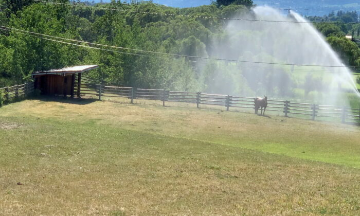 Sprinklers spray water on a horse amid a heatwave in Kelowna, British Columbia, Canada, on June 27, 2021. (Twitter @Canadianbyluck via Reuters)
