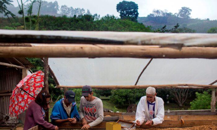 Farmer family members select coffee beans at their farm located in Forquilha do Rio, municipality of Dores do Rio Preto, Espirito Santo, Brazil, on Nov. 23, 2017.(Mauro Pimentel/AFP via Getty Images)