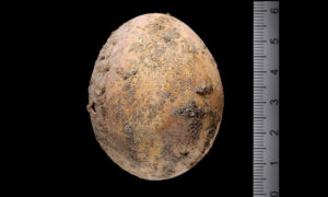 Archeologists Find 1,000-Year-Old Intact Chicken Egg From Byzantine Age in Excavation in Israel