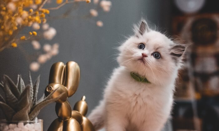 While cats that spend time outside are more likely to encounter parasites, even indoor-only cats can become infected. (Steve Tsang/Unsplash)