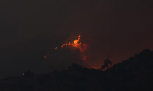 Cyprus: 4 Found Dead in 'Most Destructive' Forest Blaze