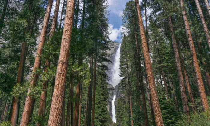California's Yosemite National Park has many waterfalls, but Yosemite Falls is the most spectacular. (Courtesy of Visit Yosemite-Madera County)