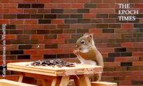 Hilarious Squirrel Moments