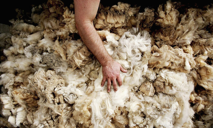 Australian wool is sorted on the show floor before sale in Sydney, Australia on August 3, 2005. (Ian Waldie/Getty Images)
