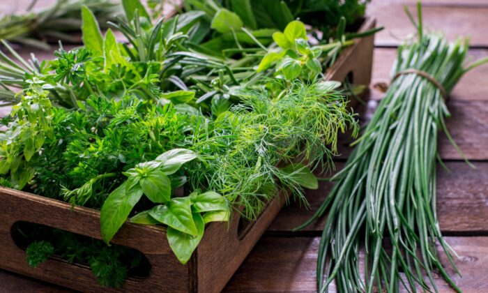 Fresh garden herbs such as peppermint, rosemary, cilantro, basil, perilla, and chives are all good to improve digestion, clean the blood, and keep the energy balanced. (NSphotostudio/Shutterstock)