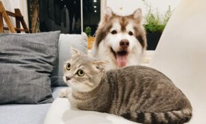 Study Finds Dogs Are Better Than Cats at Preventing Loneliness in Lockdowns