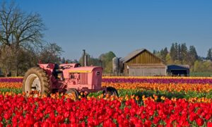 How to earn money and travel by working on farms