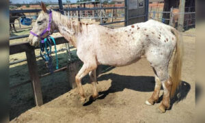 Abandoned Blind Horse Found Near Death in SoCal, Saved by Animal Services, Now 'Spunky,' 'Sweet' Girl