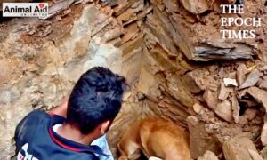 Mother Dog Helps Rescuers Dig Up Her Buried Puppies