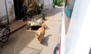Touching Video Shows Loyal Dog Running Behind Ambulance Taking Owner to Hospital