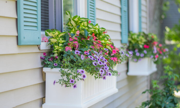 Window boxes are a blank slate for you to design and plant in. (ellieanneimages/Shutterstock)