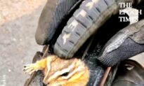 Kind-Hearted Guy Frees Stuck Chipmunk
