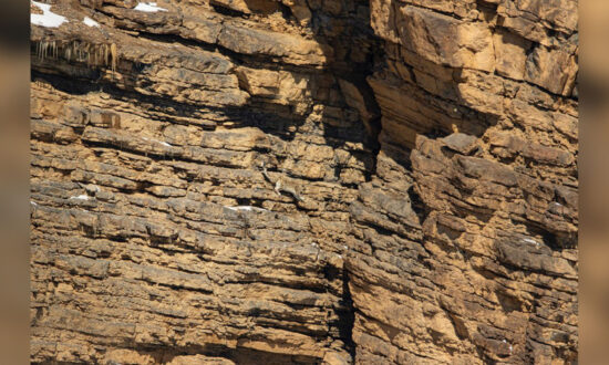 'Art of Camouflage': Can You Spot the Snow Leopard Hidden on This 'Barren' Rocky Cliff Face?