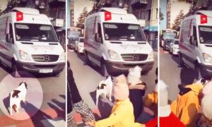 NEW VIDEOS: Crosswalk Patrol Dog That Helps Schoolkids Cross the Street in Georgia Is Still at It