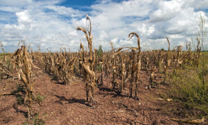 The ways drought is effecting small farmers