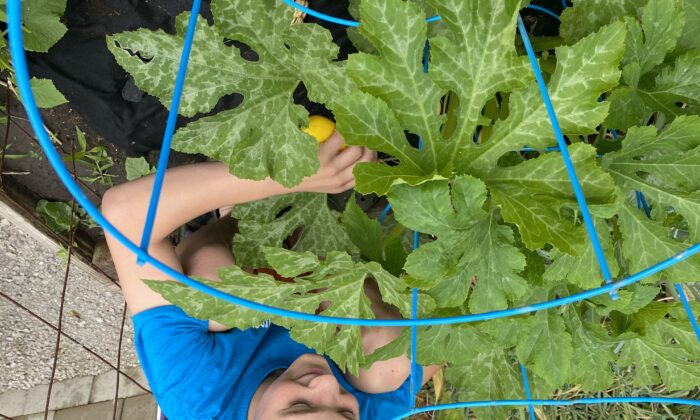 Harvest to Help: Gardeners Who Donate Extra Produce