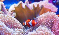 Australia Awaits UNESCO Vote for Great Barrier Reef 'In Danger' Listing