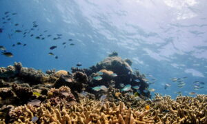 UNESCO Keeps Great Barrier Reef Off 'In Danger' List After Pushback From Australia