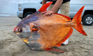 Beach Volunteer Finds Massive 100-Pound Moonfish Washed Up in Oregon—and the Photos Go Viral