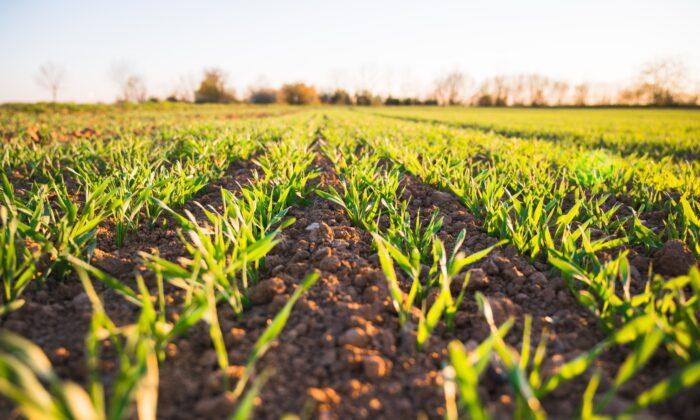 Food production is increasing almost every year, according to U.N. data. (Jan Kopřiva/Unsplash)