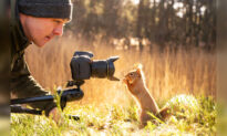 Curious Squirrels and a Tiny Bird Team Up to Investigate Photographer's Camera