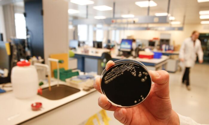 A culture of the Legionella bacteria is seen at a hospital in Ghent, Belgium, on May 17, 2019. (Nicolas Maeterlinck/AFP/Getty Images)