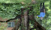 Choosing old, new trees for your lawn