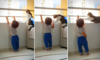 VIDEO: Quick-Thinking Family Cat Sees Toddler Reach for High-Rise Balcony Rail, Takes Adorable Action