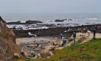 Tide Pools, Seascapes, and a Fairy-Tale Grove