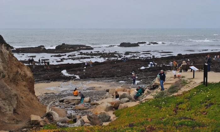 The Fitzgerald Marine Reserve. (Courtesy of Karen Gough)