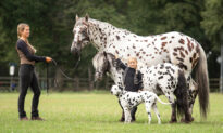 Photos: 'Identical-Looking' Horse, Pony, and Dog With Matching Spots Are Best Friends