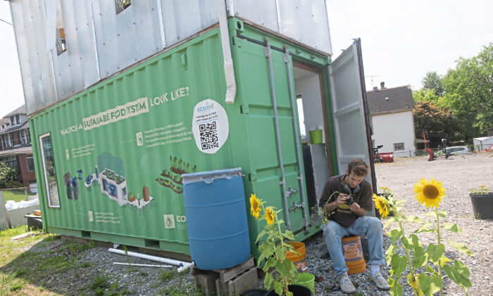 """Nate McDowell from Squirrel Hill, an intern with Ecotone Renewables replants tomatoes grown at the """"Seahorse,"""" in Swissvale, Pa., on July 23, 2021. (Pam Panchak/Pittsburgh Post-Gazette/TNS)"""