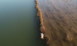 Dead Livestock Litter Parts of Central China After Flood