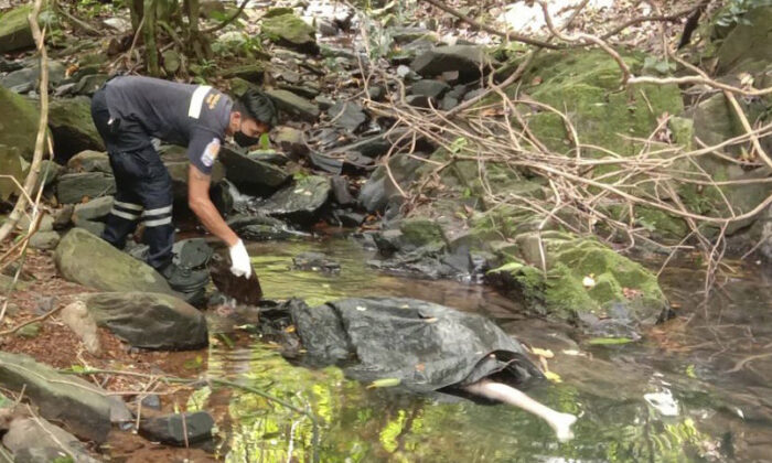 An officer inspects the scene where a woman was found dead at a secluded spot on the southern island of Phuket, Thailand, on Aug. 5, 2021. (AP Photo)