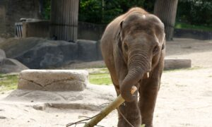 NO to 'Elephant Rights' and 'Water Rights'