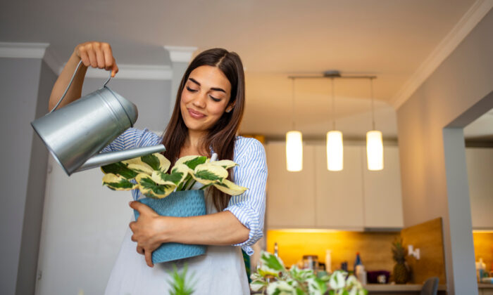 Houseplants offer a number of surprising physical and mental benefits. (Dragana Gordic/Shutterstock)
