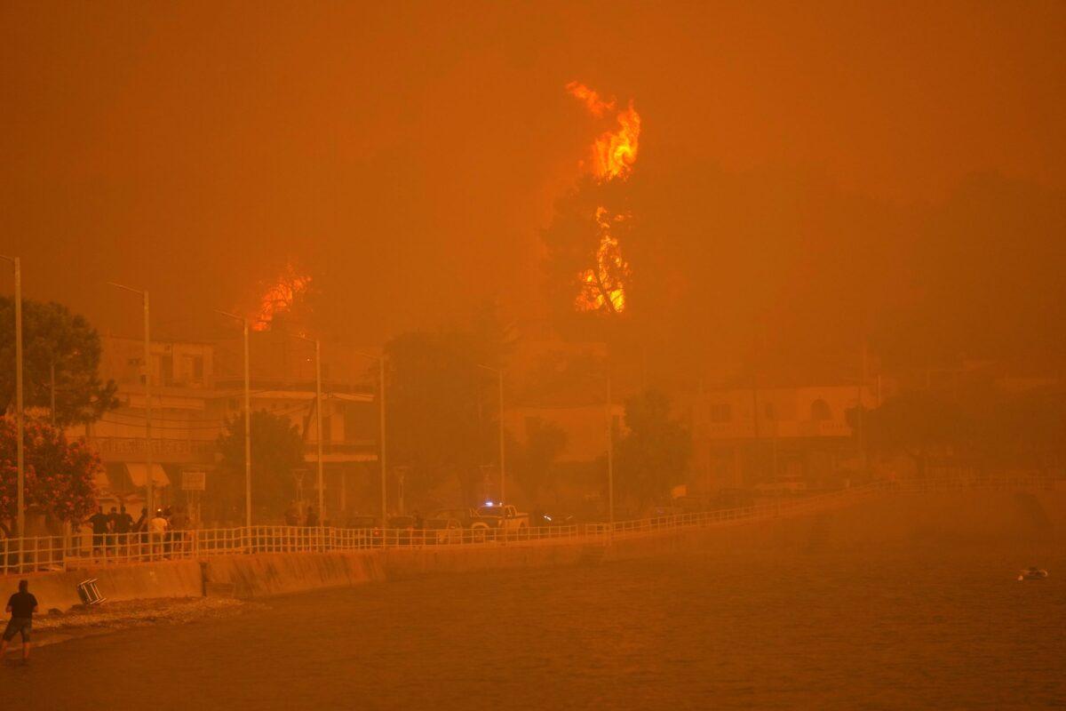 fire-burns-trees