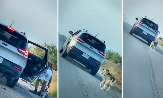 Video Shows Husky Run After Owner's Car After Abandoned on Roadside; Family Gives Him New Home