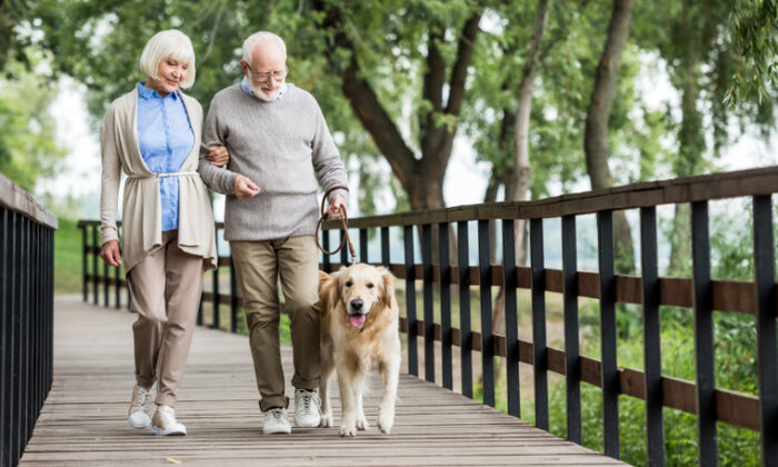 Consistent moderate exercise is important, so walk your dog daily, not just on weekends. (LightField Studios/Shutterstock)