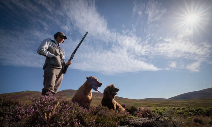 A grouse hunter with two dogs in an undated file photo. (Jane Barlow/PA)