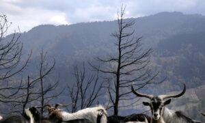 Greek Wildfires: New Blaze Breaks out on Evia Island