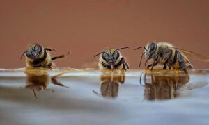Hilarious Photo Shows 3 Bees Drinking, 'Telling Jokes,' 'Falling out of Chair Laughing'